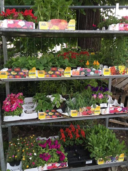 Vendita piantine da orto reggio emilia quattro castella for Vendita piante da giardino